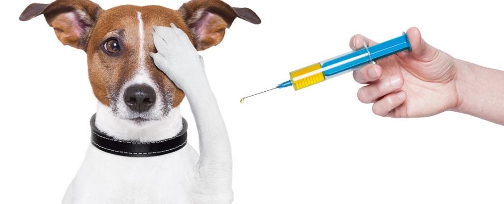 Вакцинация животных в Омске