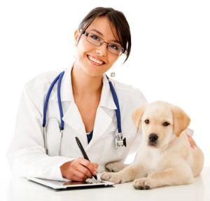 Ветеринарные услуги Петан