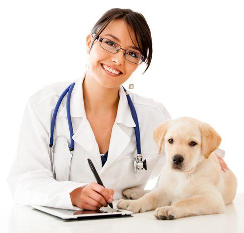 Петан, ветеринарная клиника-0017