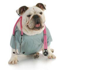Ветеринарная клиника, хирургия