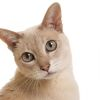 Петан, ветеринарная клиника-0022