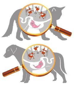 лечение паразитов у сабак