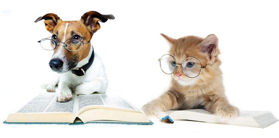 лечение зрения у животных