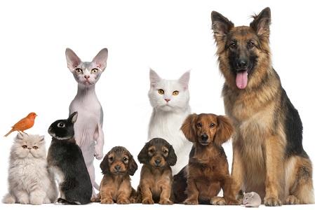 Прививки собакам, кошкам, кроликам, хорькам