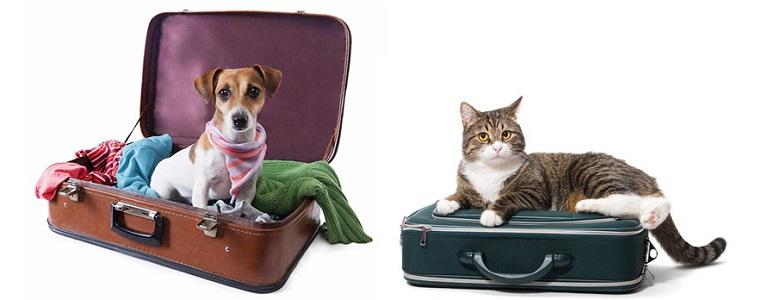 чипирование кошек и собак