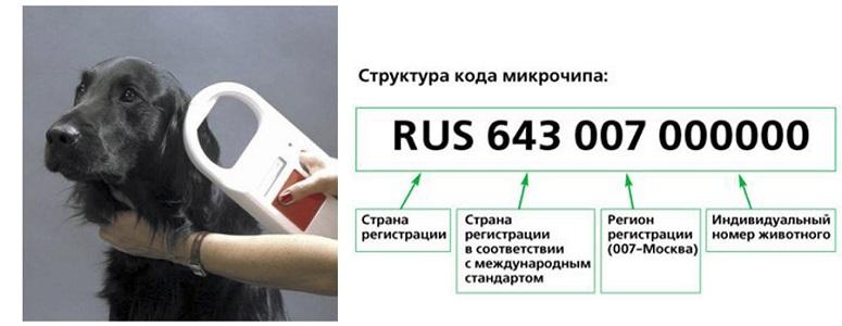 Как с 1 апреля в Москве будут чипировать домашних животных? 1 | ВЕТКУПОН - всё о животных: новости, ветуслуги, зоотовары в Москве