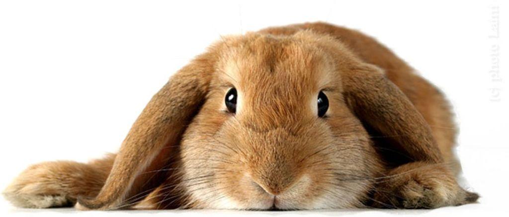 Лечение кролика